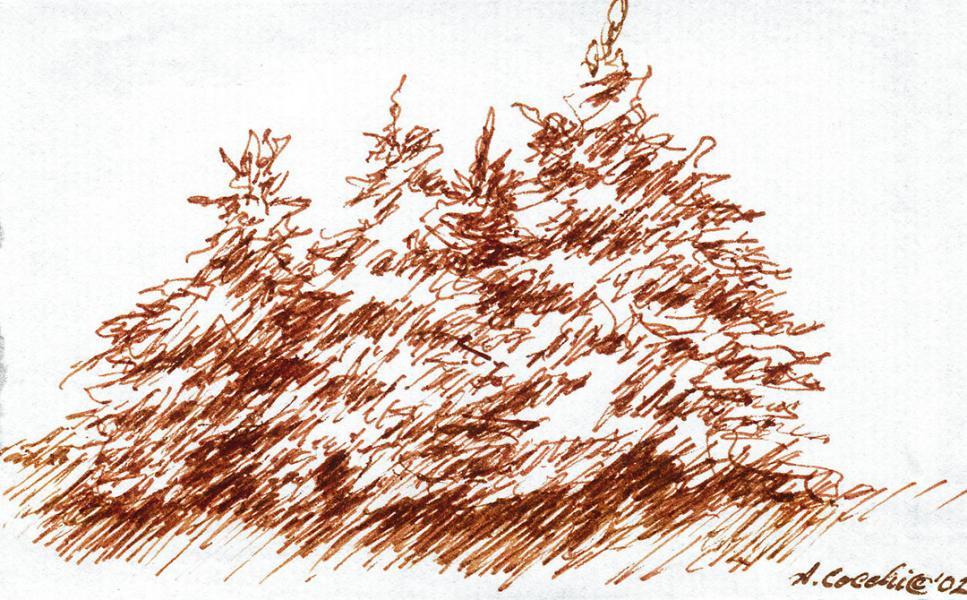 Abeti. 2002. China seppia su carta. cm. 14,7X21. Copyright © A. Cocchi 2002