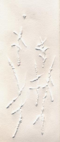 Foresta. 2002. Rilievo su carta. cm. 39X22,5. Copyright  A. Cocchi © 2002