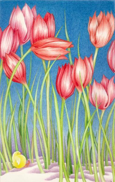Notte e dì. Sotto i tulipani. 1994. Pastelli su carta. cm.29,7X21. Copyright  A. Cocchi ©  1994
